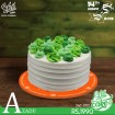 Green Flowers Icing Cake